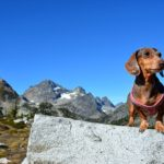 Training Your Dog to Hike: Start Small Then Go Big