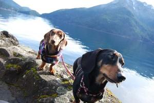 Pioneering the Dog Friendly Spruce Railroad Trail