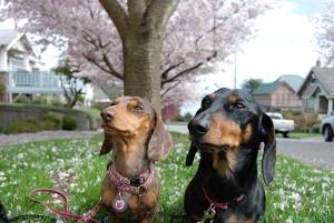 We Love Spring!