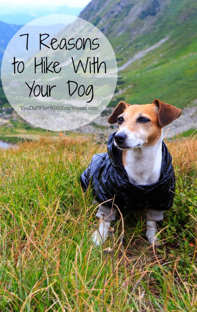 7 Reasons You Should Go Hiking With Your Dog