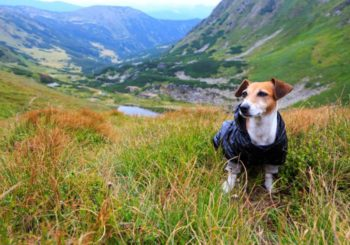7 Reasons to Hike With Your Dog