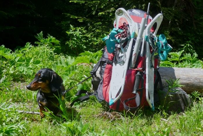 7 Reasons Why Hiking with a Small Dog is Better