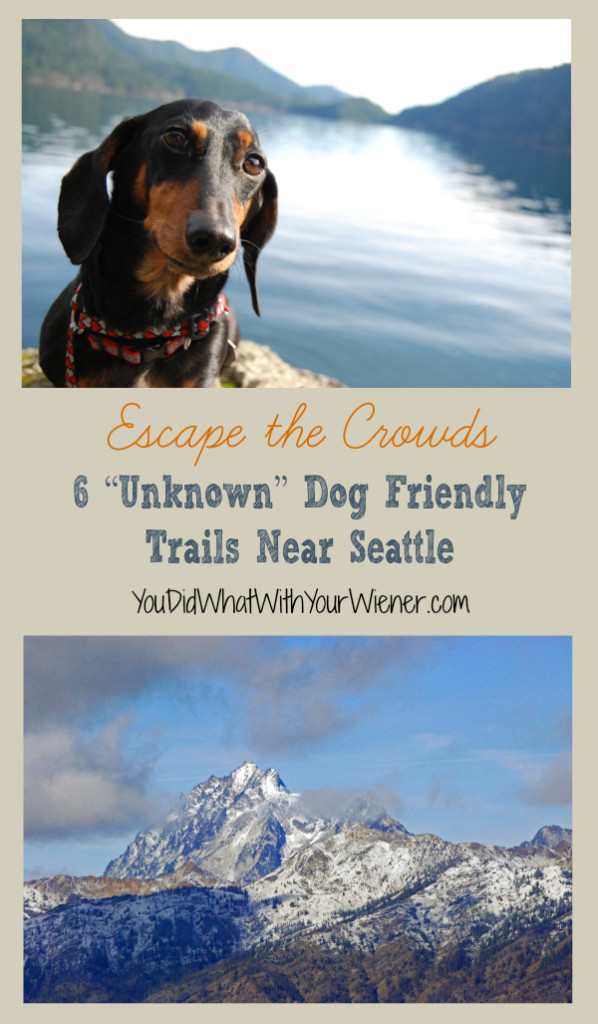 6 Unknown Dog Friendly Trails Near Seattle
