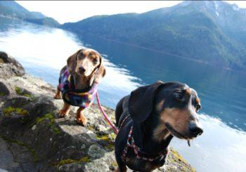 "6 ""Unknown"" Dog Friendly Trails Near Seattle"