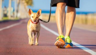 How Many Calories Do You Burn Walking Your Dog?
