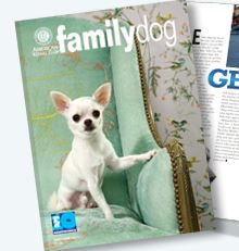 Family Dog Cover