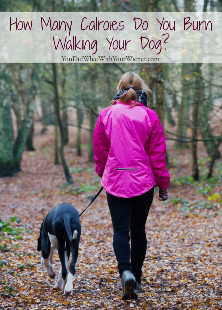 Walking your dog is an easy way to improve your health