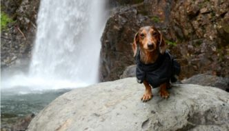 Don't Be THAT Guy – Good Etiquette When Hiking With Your Dog