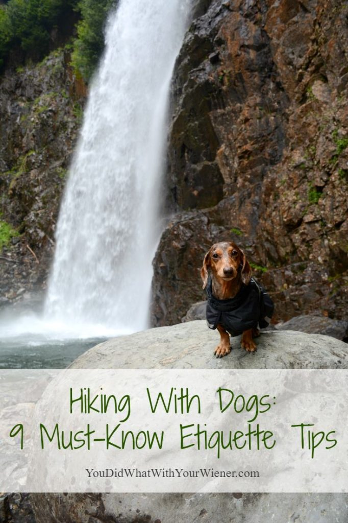 Important Etiquette Rules to Know When Hiking With Dogs