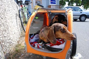 Bike Touring Mukilteo to Langley with Two Wieners in a Doggie Trailer