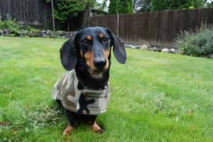 The Cozy Hound Fleece Dachshund Jacket Review