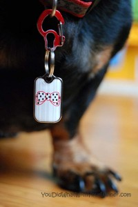 Easily Move Dog Tags from One Collar to Another