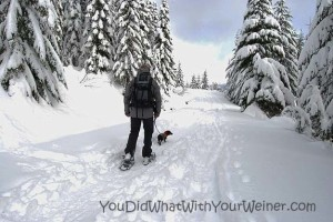 Want to Learn How to Snowshoe with Your Small Dog?