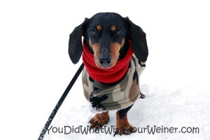 Snowshoeing with Your Small Dog 101 Part IV – Clothing and Gear for Your Dog