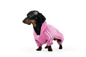 istock_dog-in-suit_xsmallB