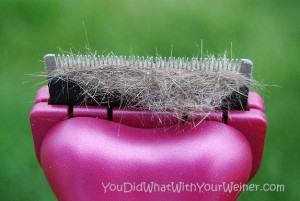 clump of dog hair in the Furminator deShedding Tool