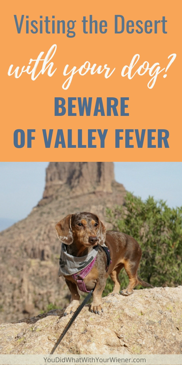 If you don't know about Valley Fever, you need to read this article.