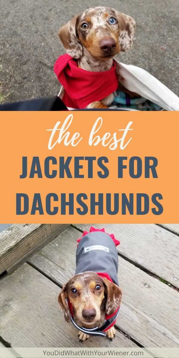 It can be really hard to find jackets to fit a Dachshund's long body and deep chest.