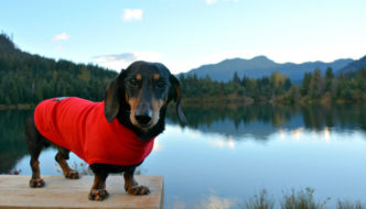 Teckelklub Fuzzie fleece jacket for dogs