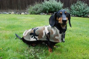 Chester the Dachshund in his Cozy Hound fleece jacket
