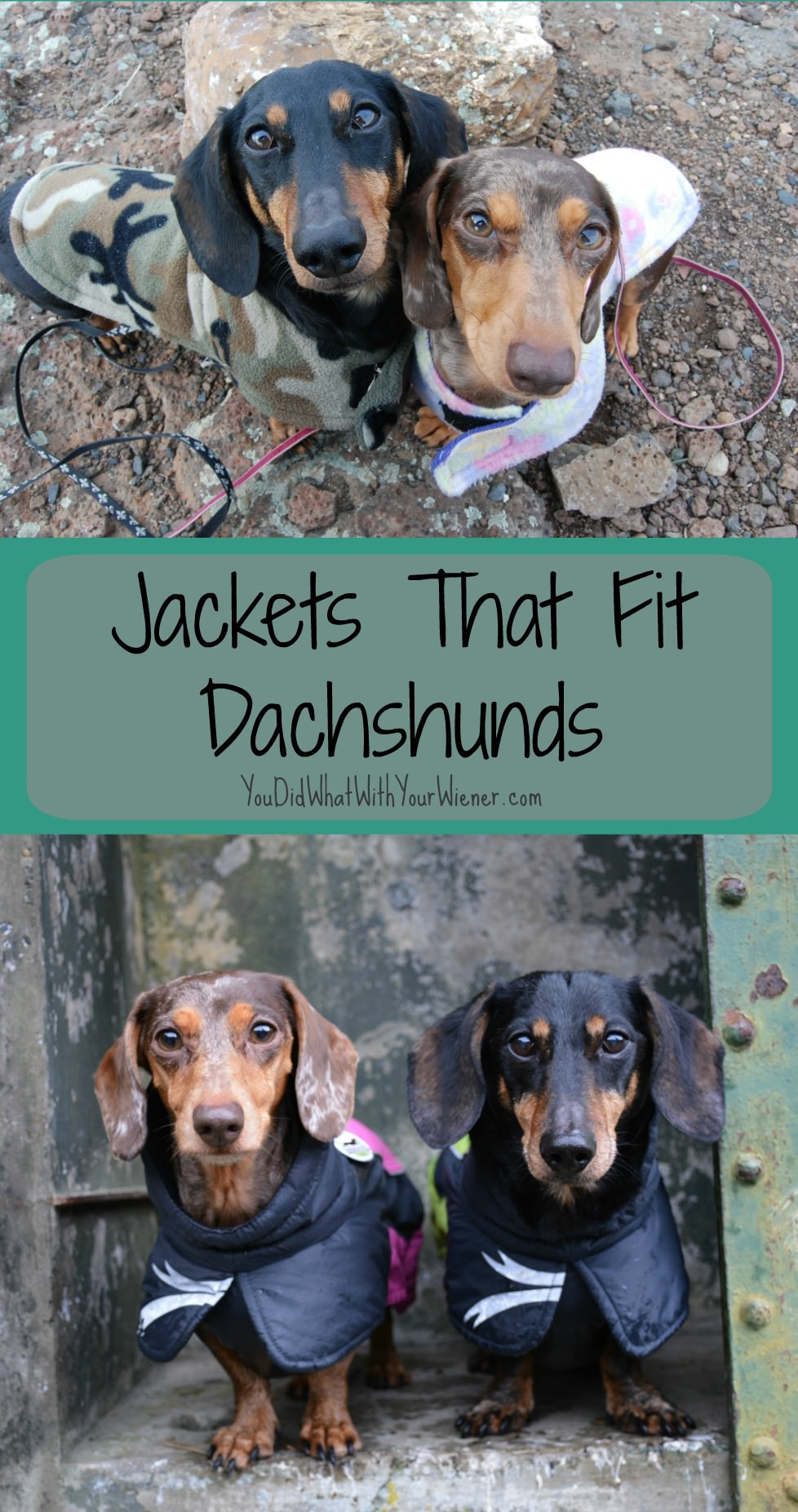 Dachshund bodies are long and their legs are short so it's had to find dog coats that fit.