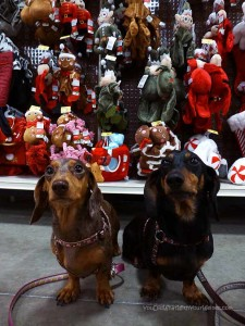 Pre-Christmas Shopping With the FurKids