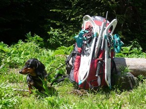 Dachshund and backpack