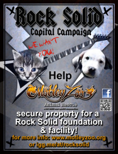 MZ Rock Solid Campaign Poster