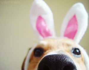 WW #68 – Easter Doxie