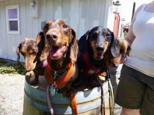 Wine Barrel Wieners