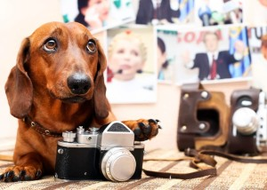 Photo Doxie
