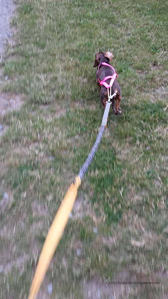 Three Ways My 10 lb Dog Made Me Look Bad at K9 Kamp
