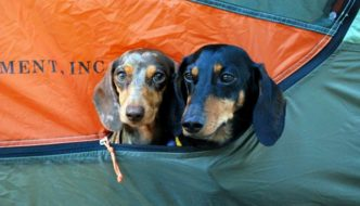 Tips for Organizing a Dog-friendly Group Car Camping Trip