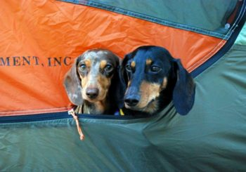Article: 7 Things to Know When Organizing a Dog-friendly Group Camping Trip