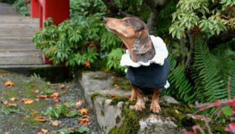 Gretel hanging out at the Kubota Gardens in her Luxy Jacket