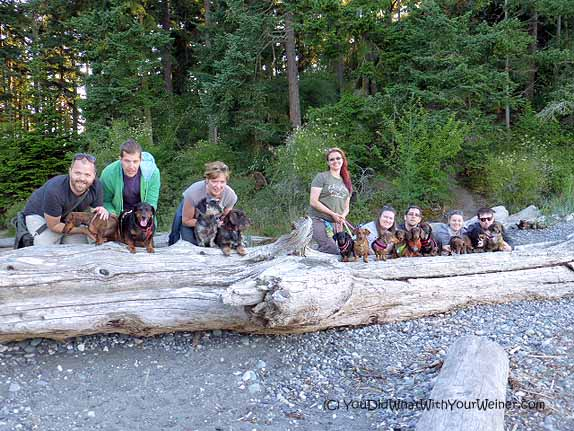 Our group of Dachshunds on the beach at Deception Pass State Park