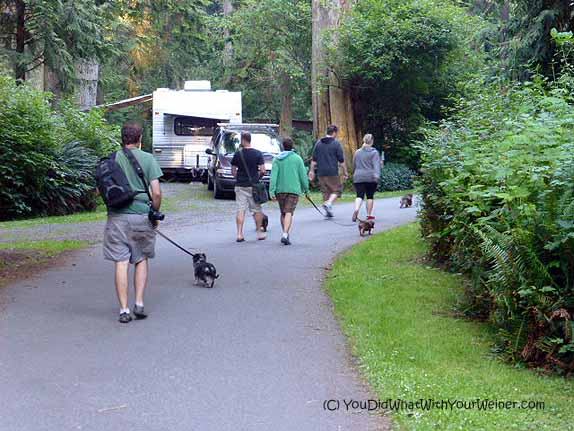 Our group of campers walking our dogs through the campground before heading to bed