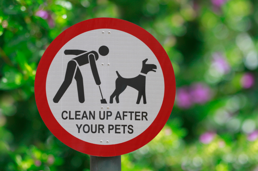 Dog poop pick up