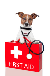 Upcoming Roadtrip? Make a Pet First Aid Kit For Your Car