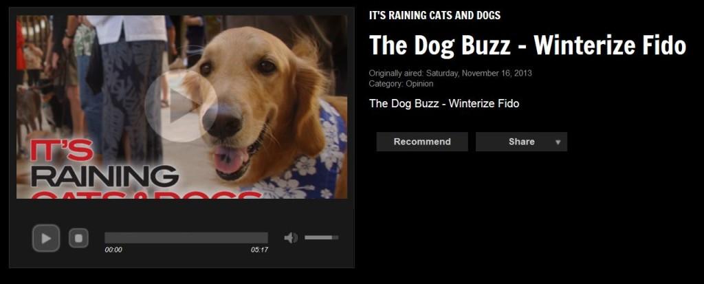 November Dog Buzz