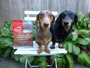Dachshunds with Orijen Regional Red Freeze-dried dog food