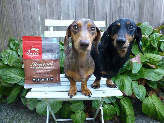 Dachshunds with Orijen Regional Red Freeze-dried dog food