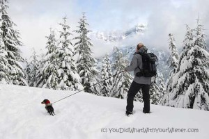 Stay Fit this Winter by Snowshoeing with Your Dog