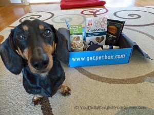 Exploring the #PetBox Subscription Dog Goody Box