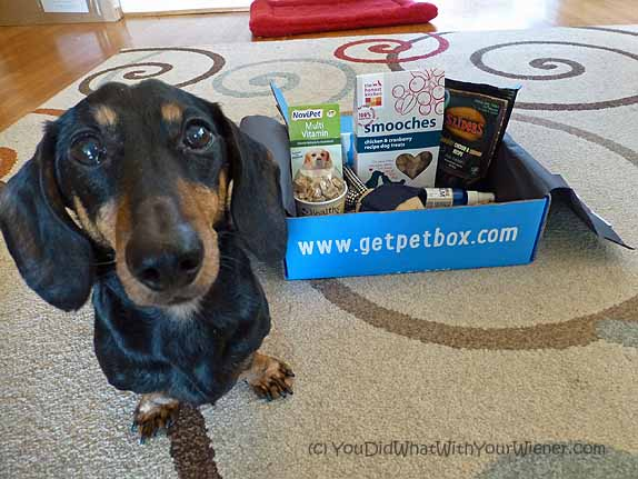 PetBox subscription dog box