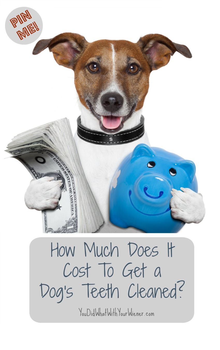 Cost of Getting Your Dogs Teeth Cleaned
