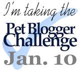 Pet Blogger Challenge 2014
