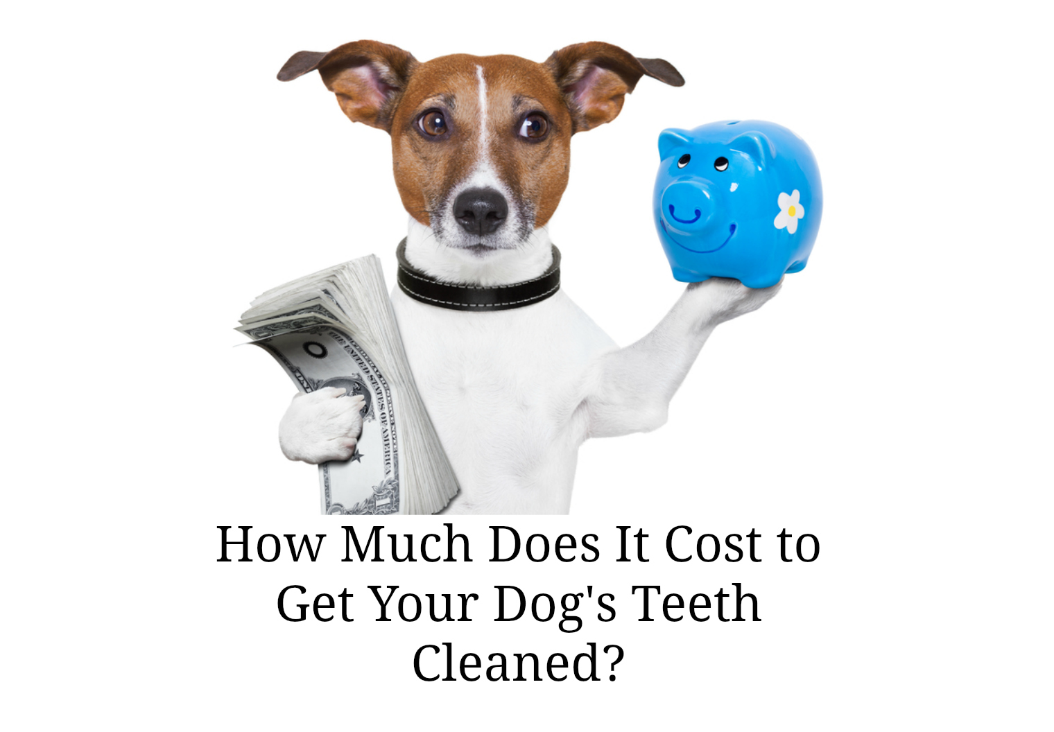 Cost To Get Dogs Teeth Cleaned