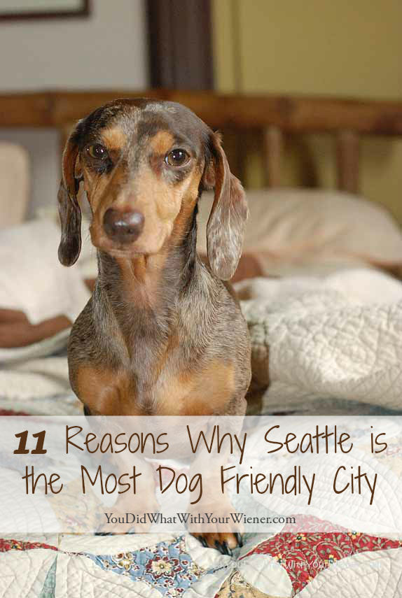 Seattle is a great city for dog lovers