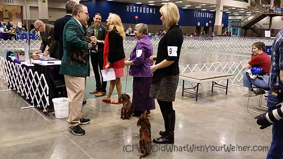 6 Things I Learned at the SKC Dog Show